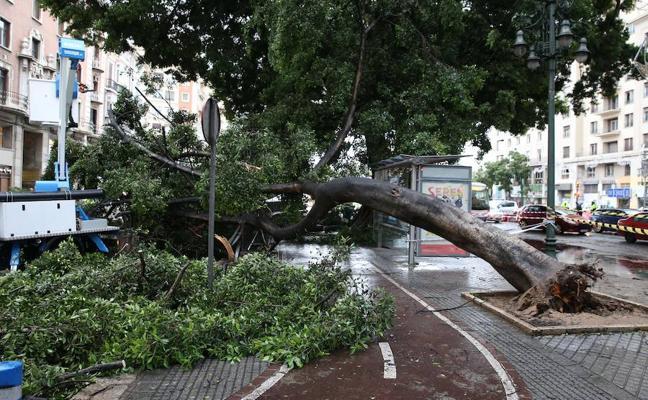 El vendaval del lunes en Málaga capital tiró 40 árboles: relación de ejemplares y calles afectadas