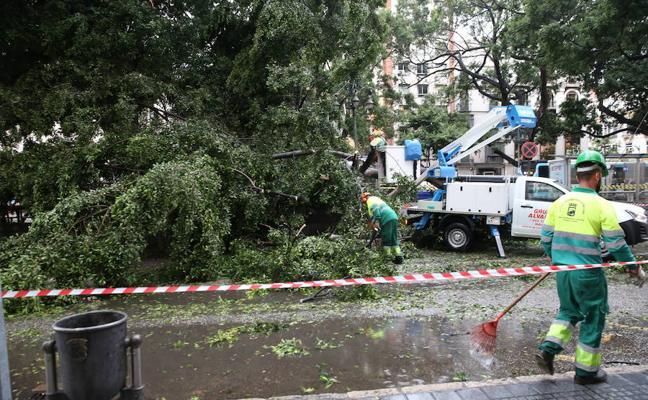 El Ayuntamiento tiene que sustituir 9.000 árboles en las calles de Málaga