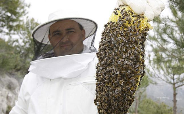 Crean una plataforma para impulsar la digitalización de la apicultura