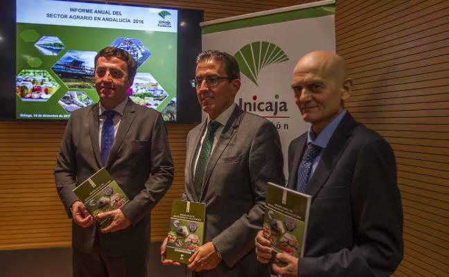 Málaga está entre las cinco provincias andaluzas donde crece la renta agraria