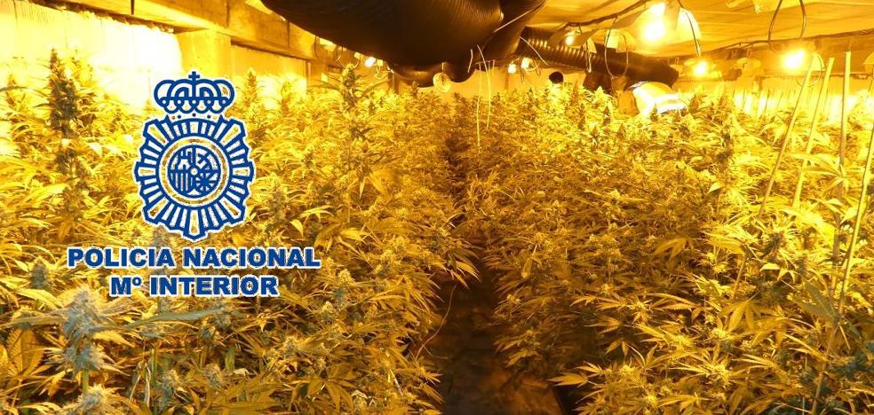 Desmantelan dos cultivos de marihuana en una vivienda de lujo de Marbella