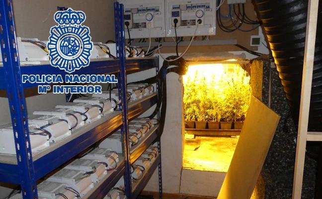 La policía desmantela un invernadero de marihuana en una vivienda de lujo