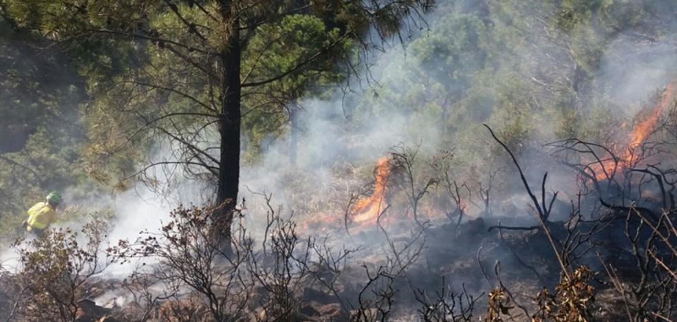 Estabilizado el incendio forestal en Benahavís