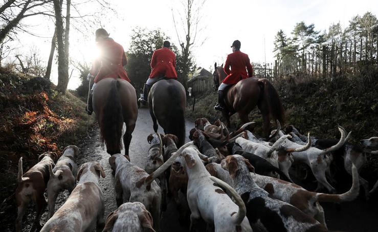 Los británicos salen a la caza del zorro pese a su prohibición
