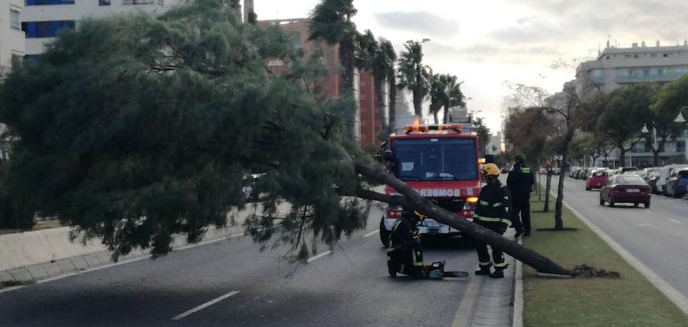 Reabierta al tráfico calle Pacífico de Málaga capital tras la caída de un árbol