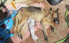 Rescatan a 38 perros en una operación en la Axarquía contra el maltrato animal