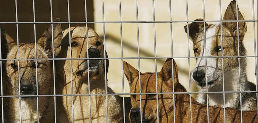 El Ayuntamiento de Málaga destinará este año más de 100.000 euros a entidades protectoras de animales de compañía