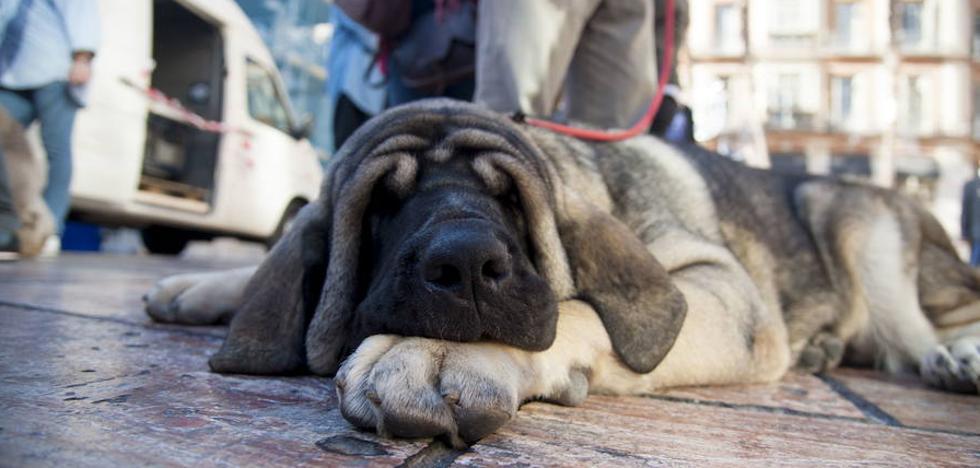 El Ayuntamiento estudiará crear una policía especializada para el bienestar animal
