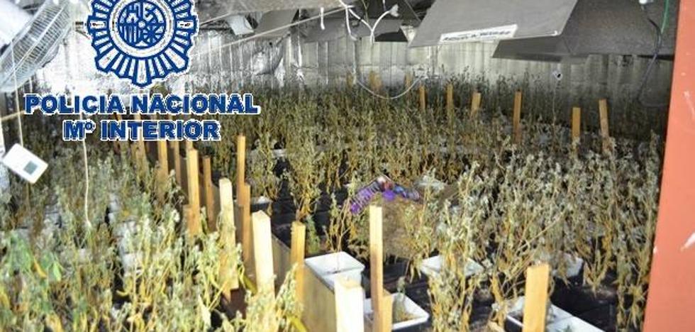 Un «fuerte olor a cannabis» permite intervenir 453 plantas de marihuana en un chalet marbellí