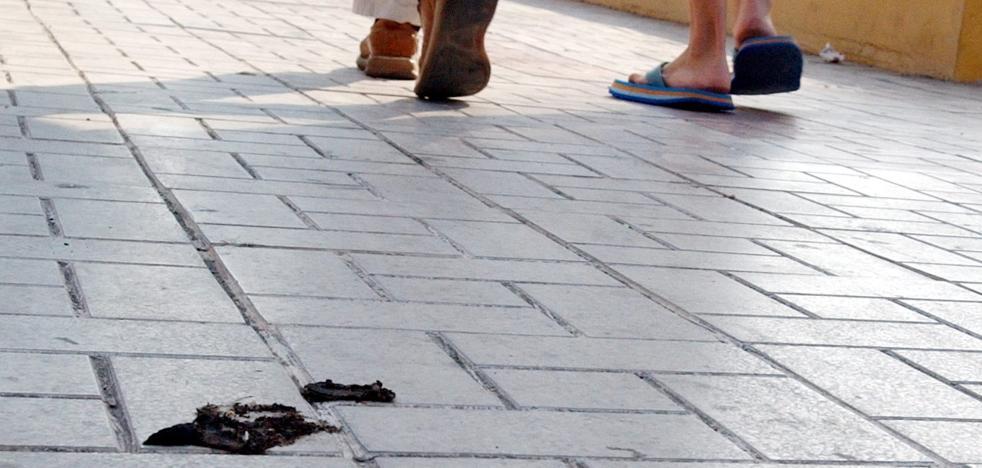 La Policía Local de Torremolinos interpone 29 denuncias por excrementos caninos en la calle