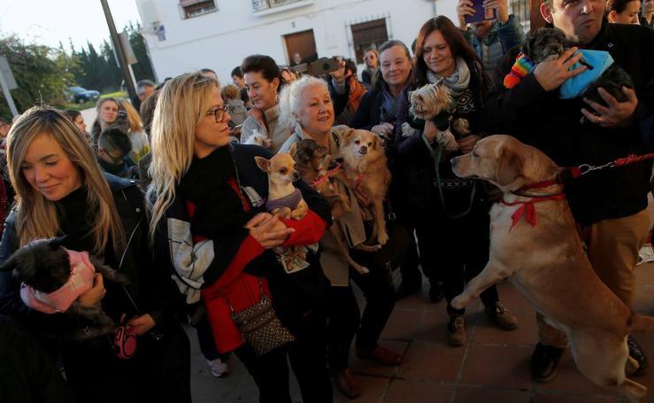 Imágenes de la celebración del Día de San Antón en Churriana