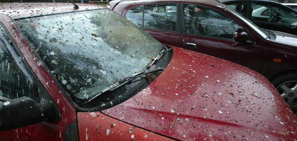 Cómo limpiar las cacas de pájaros de tu coche sin dañar la pintura