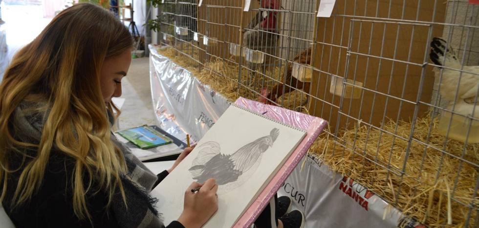 La gallina sureña, protagonista del fin de semana en Coín