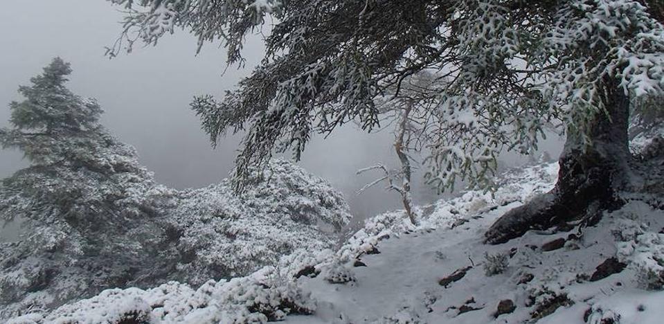La Junta tramita el informe inicial para que la Sierra de las Nieves sea parque nacional