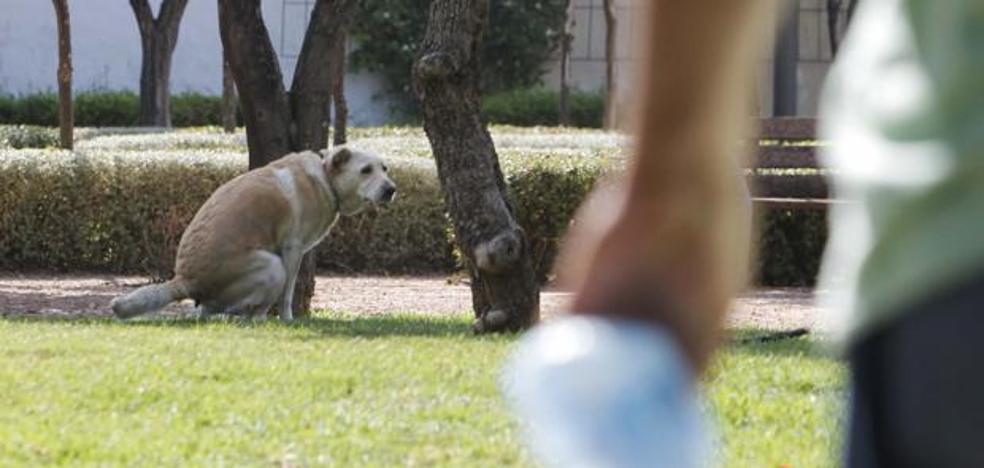 ¿Cuánto te puede caer de multa si no registras el ADN de tu perro en Málaga capital?
