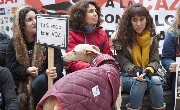 Más de 500 personas protestan en Málaga por la caza con galgos y el maltrato animal