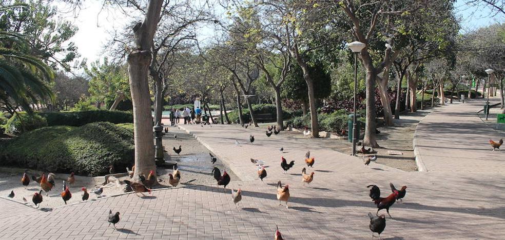 Benalmádena aprueba un plan de choque para La Paloma tras las quejas vecinales