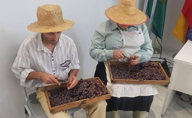El Gobierno considera un orgullo la declaración de la uva pasa como Patrimonio Agrícola por la FAO