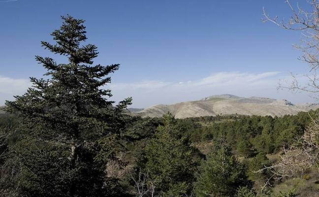 La Diputación aplaude la decisión del Gobierno de declarar la Sierra de las Nieves como Parque Nacional