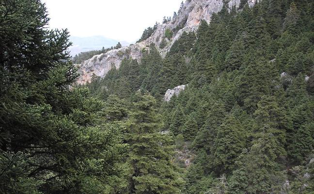 El Gobierno da luz verde a que la Sierra de las Nieves sea Parque Nacional