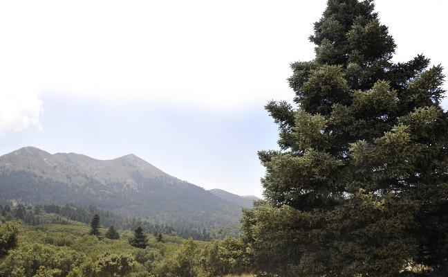 El Gobierno da luz verde para que la Sierra de las Nieves se convierta en Parque Nacional