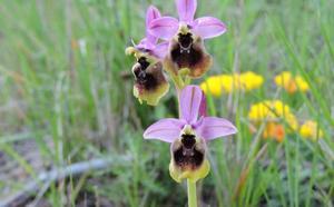 En busca de orquídeas silvestres por Jimera de Líbar