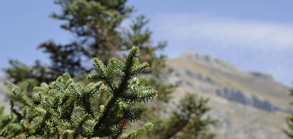La Sierra de las Nieves estará protegida de forma preventiva hasta que sea parque nacional