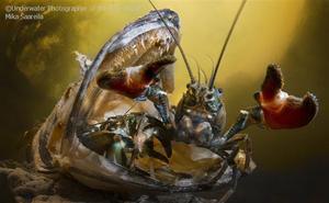 Las mejores y más impresionantes fotografías subacuáticas de 2018 que no parecen de este mundo