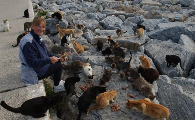 Las colonias de gatos en Málaga salen de la clandestinidad