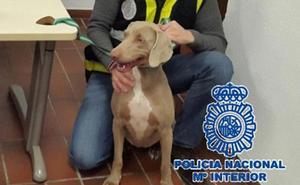 La Policía devuelve una perra de raza a su dueño después de que un vecino se la robara en Fuengirola