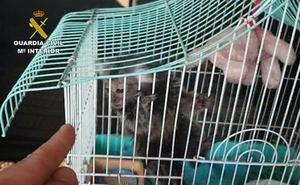 Investigan a 11 personas en Málaga por la venta ilegal de primates sin ningún control sanitario