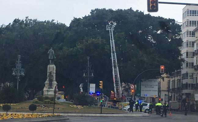 Bomberos retiran la rama de un ficus a punto de caerse en la Alameda de Málaga