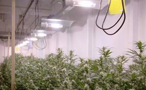 El Supremo absuelve a cinco miembros de un club de cannabis