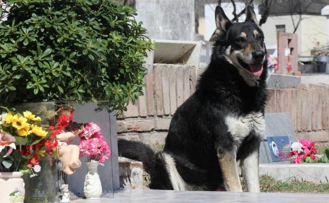 Muere 'Capitán', el perro que veló durante una década la tumba de su dueño en Argentina
