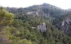 ¿Por qué no se han extinguido los pinsapos de la Sierra de las Nieves?