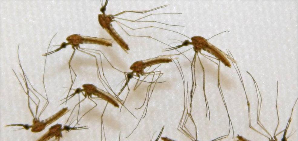 Estudian cómo enfermó de malaria una bebé de Móstoles
