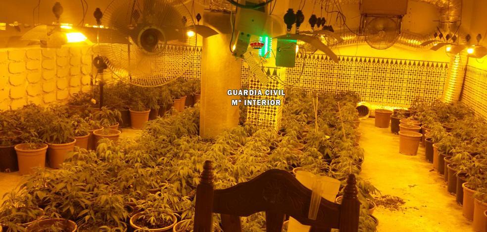 Siete detenidos por el cultivo de marihuana en Pizarra y Álora