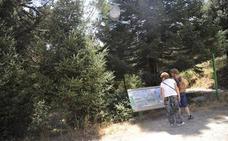 La Junta estima que la Sierra de las Nieves será parque nacional dentro de nueve meses