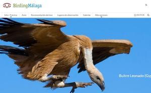 Crean una web de turismo ornitológico de Málaga con más de 159 puntos de interés