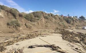 El retroceso de la línea de costa exige medidas urgentes para proteger las dunas de Marbella