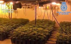 Treinta detenidos por el cultivo de más de 1.200 plantas de marihuana en la comarca de Antequera