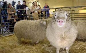 Activistas intentaron secuestrar a la oveja Dolly, pero su plan fracasó al no poder distinguirla
