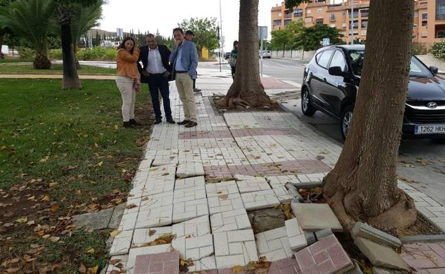 Torremolinos busca solución para los árboles que dañan el acerado y las tuberías