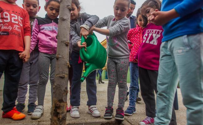 Alumnos del Antonio Machado colaboran en la mejora de las zonas verdes del colegio