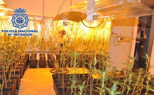 Desmantelan en Rincón de la Victoria dos laboratorios de marihuana