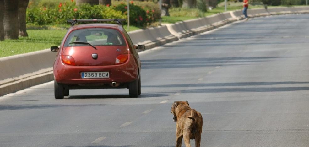 La polémica por el sacrificio de animales se instala en Marbella