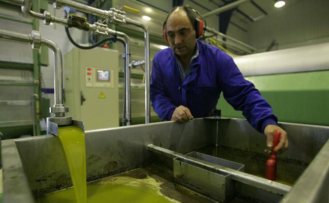 La campaña de aceite de oliva en Málaga termina con 66.000 toneladas