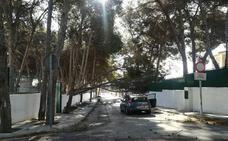Padres y madres del CEIP Palma de Mallorca vuelven a denunciar el desplome de árboles