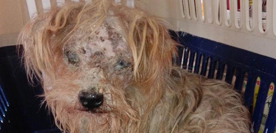 Rescatan en Málaga a un perro en muy mal estado abandonado en un contenedor de basura