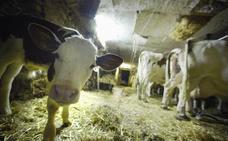 Antonio Sanz anuncia reducciones por importe de 115 millones en los módulos del IRPF de los agricultores y ganaderos andaluces
